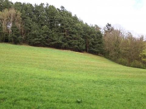Land-/Forstwirt. in Kirchschlag in der Buckligen Welt